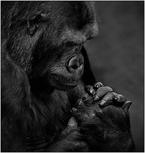 Prayer<br /> Sue Lindell