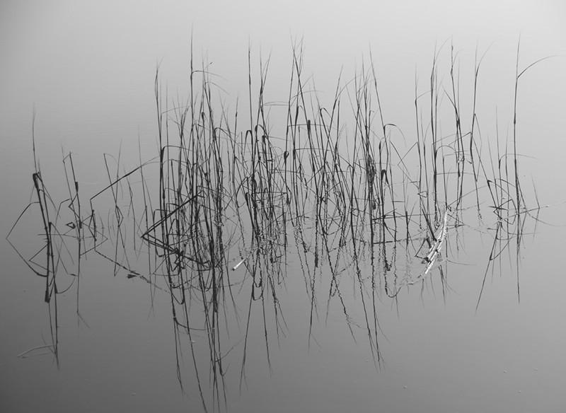 Reed Reflections in Fog, Brunswick, GA<br /> Tom Vincent