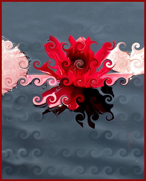 Water Lily<br /> Ken Black