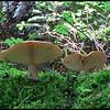 Mushroom<br /> Ken Black
