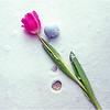 Waiting for Spring<br /> Irene Szilagyi