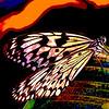 Butterfly 2<br /> Ken Kendzy