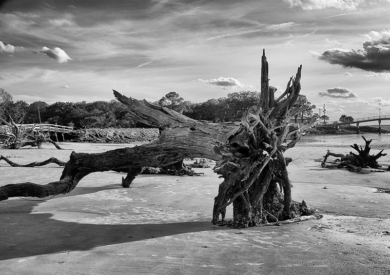 Driftwood 2, Jekyll Island, GA<br /> Tom Vincent