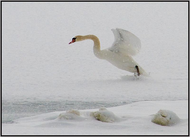 Wintry Landing - Marie Rakoczy