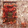Jean Ungar - Window Cover
