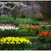 Miriam Kravis - The Garden