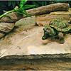 Irene Szilagyi - Spitting Turtle