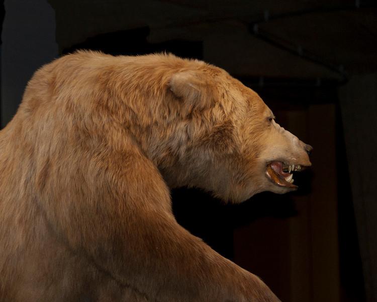 Joe Tarlos - Can't Bear to Look
