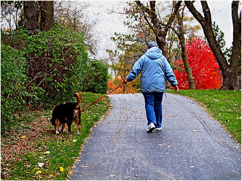 Dog Walking<br /> Irene Szilagyi