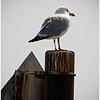 Gull<br /> Jeanne Garrett