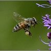 Bee There<br /> Sue Lindell