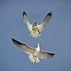 Aerial Acrobatics<br /> Sue Lindell
