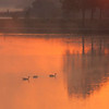 Ducks & Reflections<br /> Tom Vincent