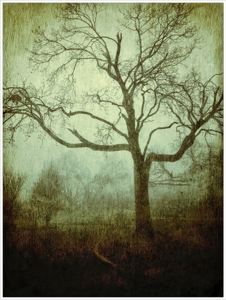 Tree in the Fog<br /> Jerry Hug