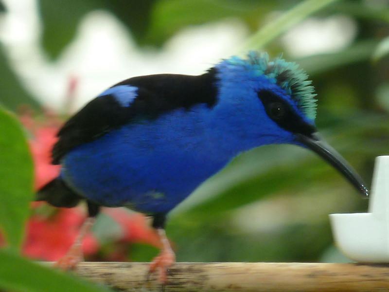Color Blue #4<br /> Rich Boyle