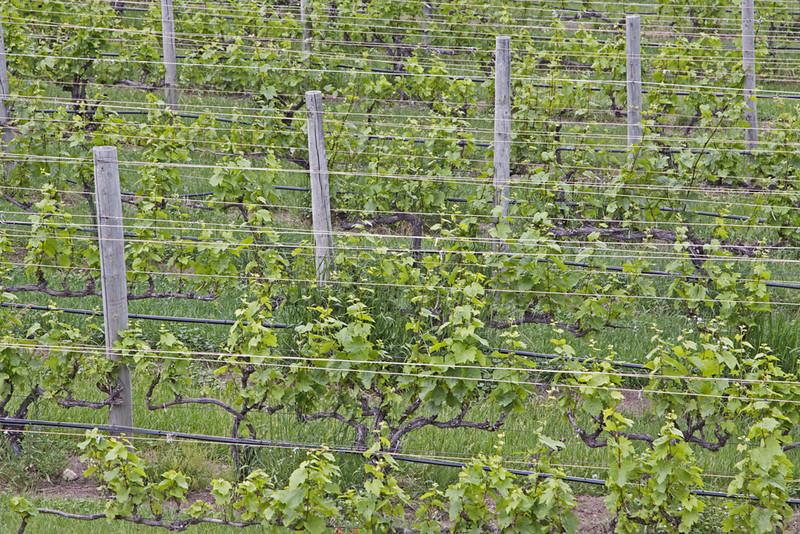 Vineyards<br /> Bob Erickson