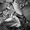 Autumn Leaves Noir<br /> Oliver Guevarra