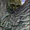 Up a Tree<br /> Ken Black