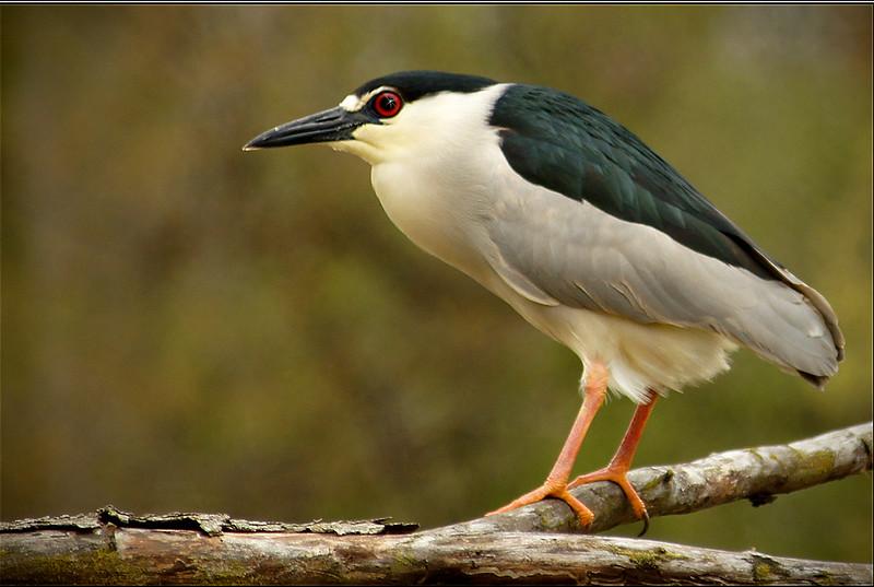 Big Bird - Gary Taylor