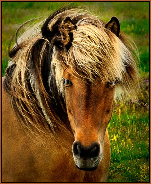 Equine Beauty - Marie Rakoczy