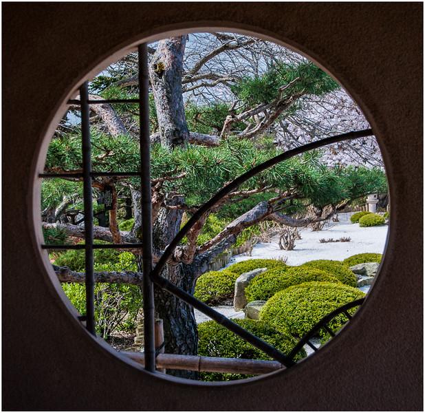 Picture Window - Dave Waycie
