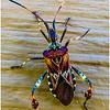 Bug - Eva Waycie