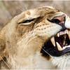 Roar! - Eva Waycie