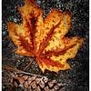 Autumn Still Life - Jerry Hug