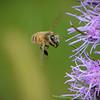 Bee Friend<br /> Sue Lindell