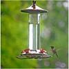 Hummingbird at Feeder<br /> Bob Ungar