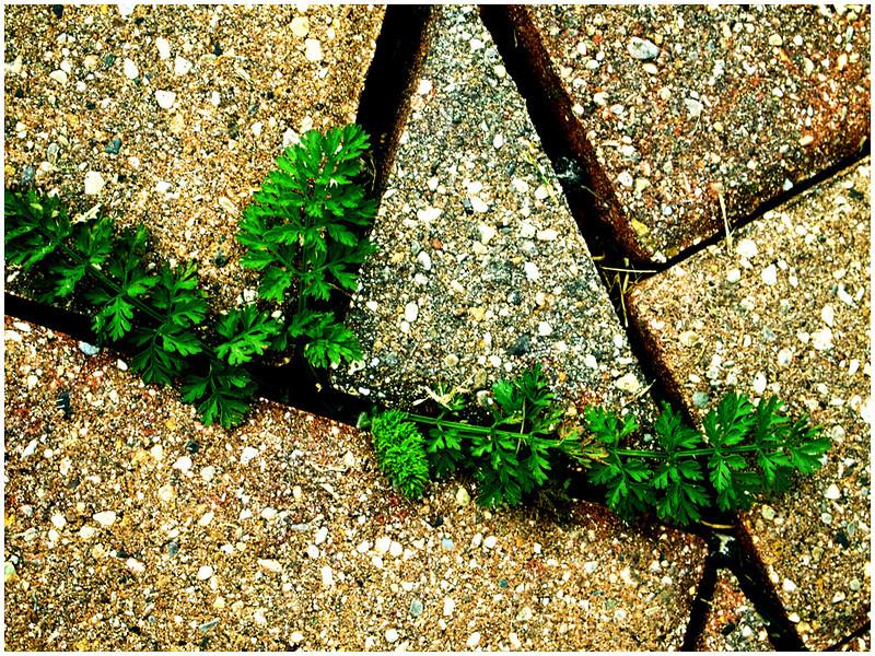 Life in the Cracks<br /> Irene Szilagyi