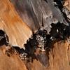 Abstract - Pine Bark<br /> Nora Liu