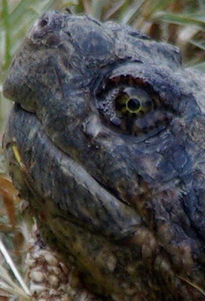 Eye of the Turtle<br /> Tom Vincent