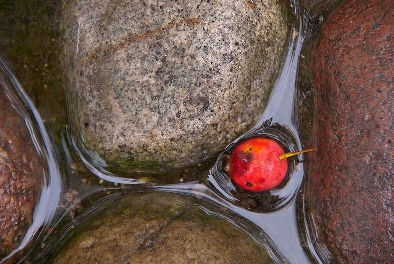 Fallen Berry<br /> Tom Vincent