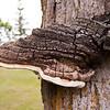 Mushroom Gigantic<br /> Tom Vincent
