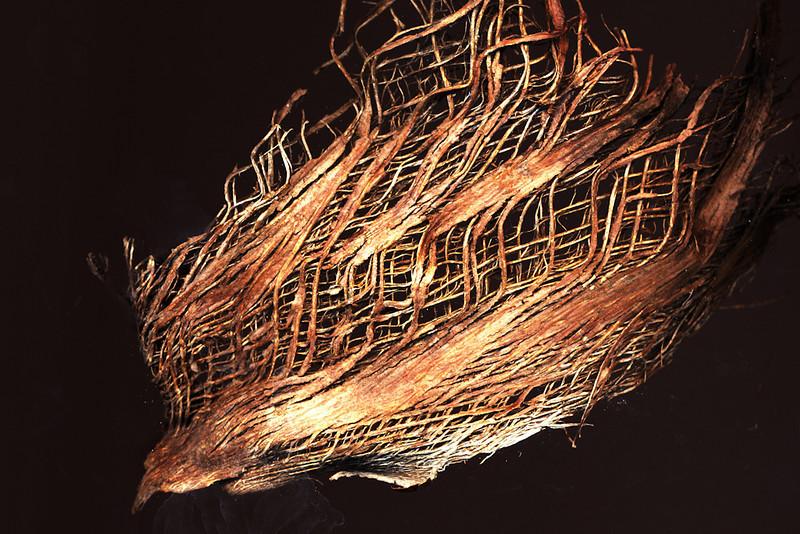 Insulating Layer Palm Tree Trunk<br /> Nora Liu