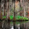 Cypress Trees<br /> John Kowalyk