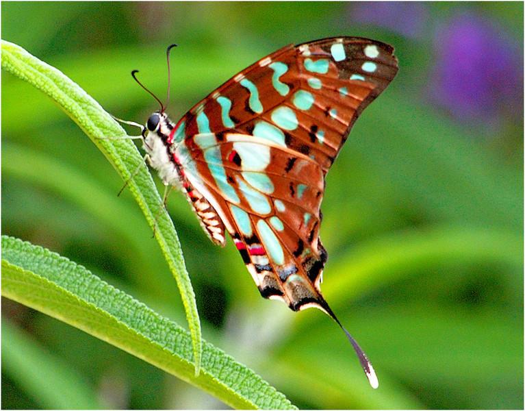 Resting Butterfly<br /> Irene Szilagyi