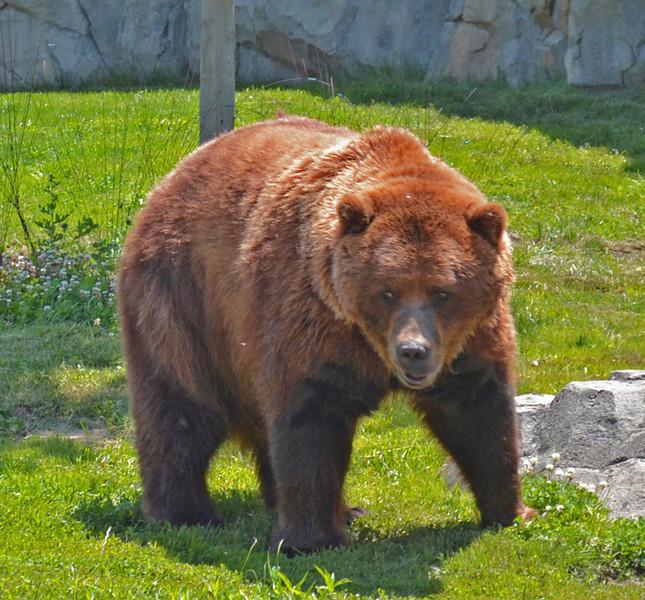 The Bear<br /> Rich Boyle