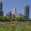 Urban Garden<br /> Jane Ballengee