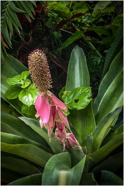 A Bromeliad, Maybe - Wes Kiel