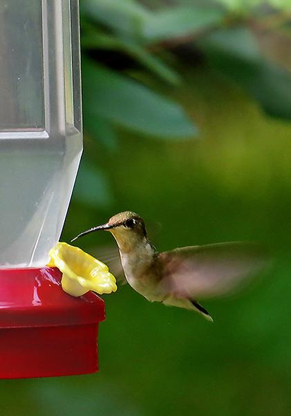 Humming Bird - Ken Kendzy