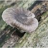 Mushroom - Peter Koch