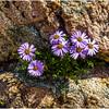 Flowers in the Rocks - Eva Waycie