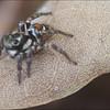 Spider on a Leaf - Peter Koch