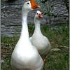 Garfield Goose and Friend - Ken Kendzy