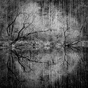 Lakeside Echoes