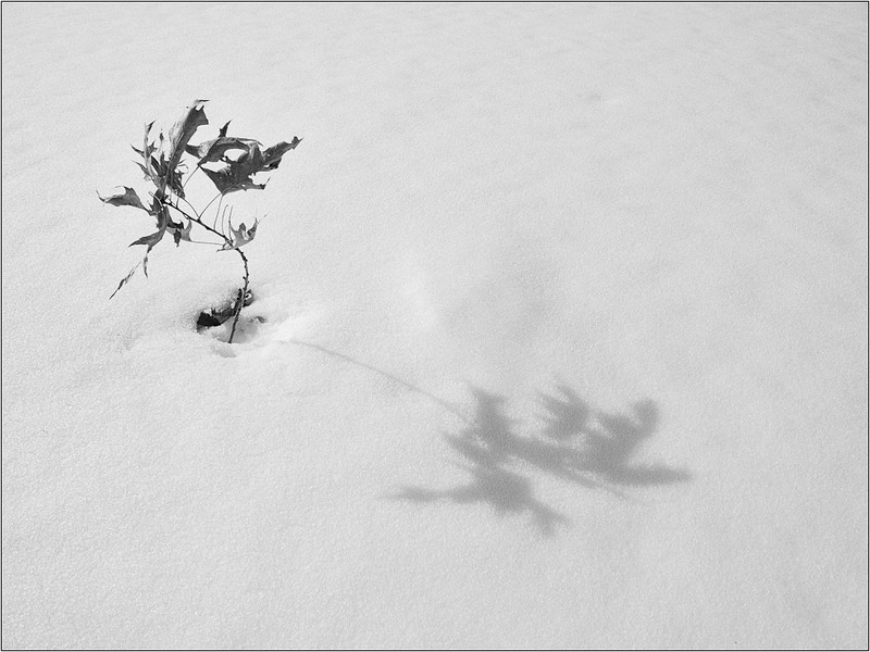 Long Shadow - Dave Waycie<br /> (DPI) May 2011