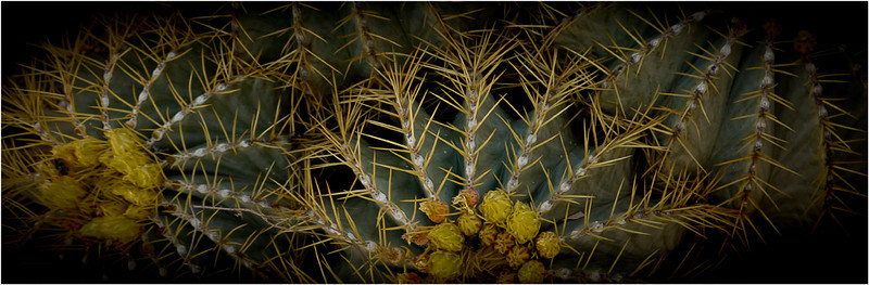 Cacti - Kathy Zelm-Gazzolo<br /> Print of the Month - November 2011