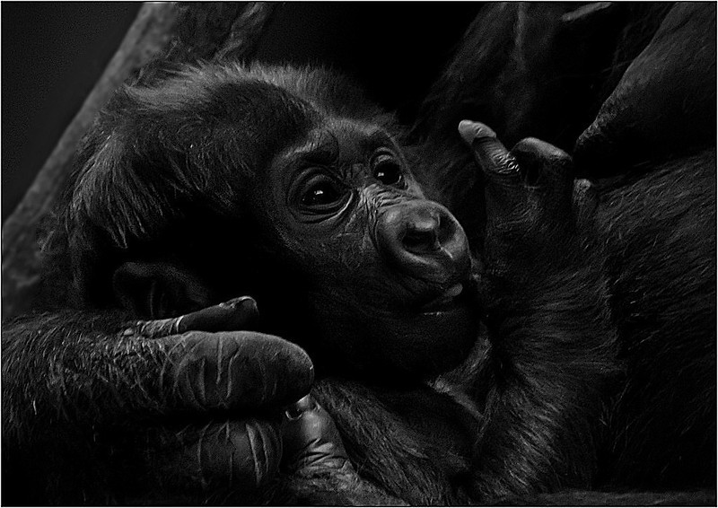 Contented Cuddle - Sue Lindell<br /> Image of the Month - April 2014